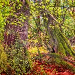 Path-Between-Maples-oil-on-canvas-by-Kathleen-Frugé-Brown-WLM
