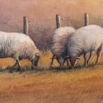 TRIO OF SHEEP