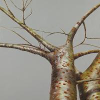 12 Tree # 7, oil on canvas, 24x24 2