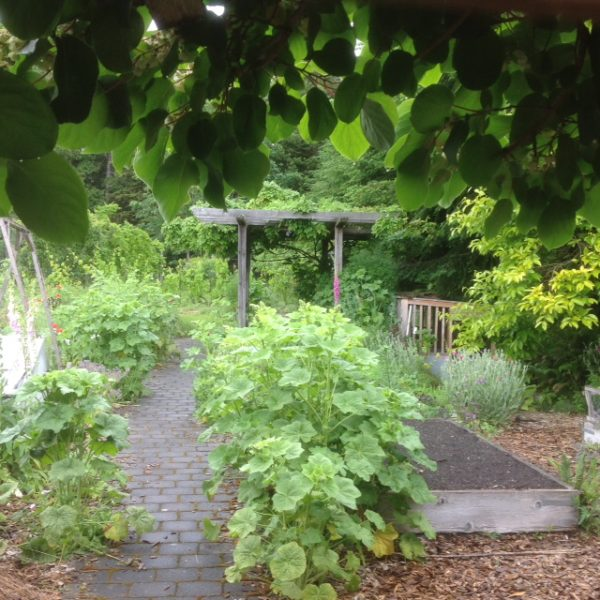 Hedgebrook garden at work—growing sustainable opportunities for women writers…   (photo by the author)
