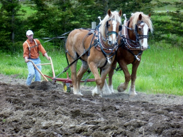 A farmer demonstrates the draft horse plow. (Photo courtesy of Greenbank Farm)