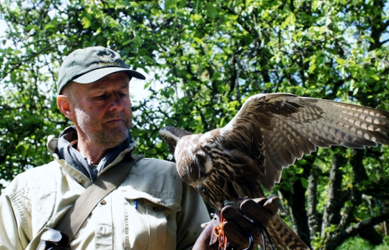 The Falcon Man is Steve Layman, who shows one of his prize raptors. (Photo courtesy of Greenbank Farm)