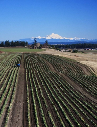 Plowing the fields of Ebey's Prairie at Willowood Farm. (Susan Wenzel photo)