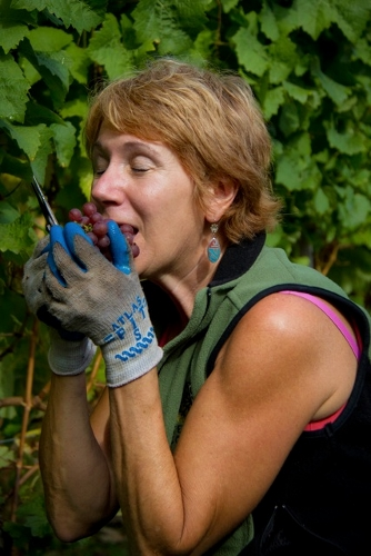 Winery Anita Mckinley 2 (334x500)
