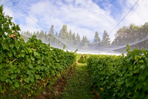 Winery Bird Netting (500x334)