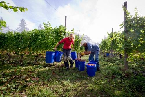 Winery Marti Murphy 2 (500x334)