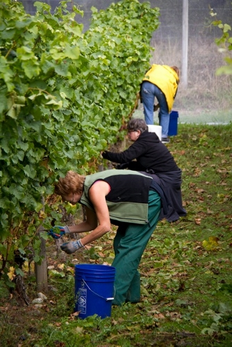 Winery Pickers (334x500)