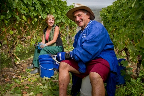 Winery Rocco Gianni making friends in the vineyard (500x334)