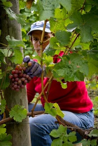 Winery Susan Wentzel 4 (334x500)