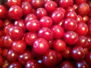 Blog jam jw wild cherry plums of Rabbit Hill (500x373)