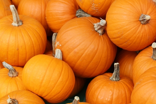 Pumpkins (500x333)