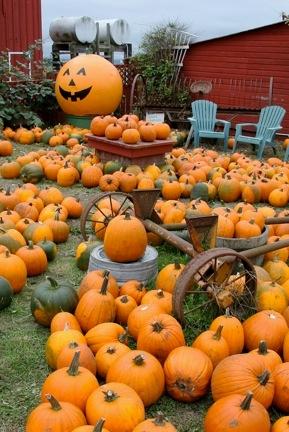 Pumpkins 289x432)
