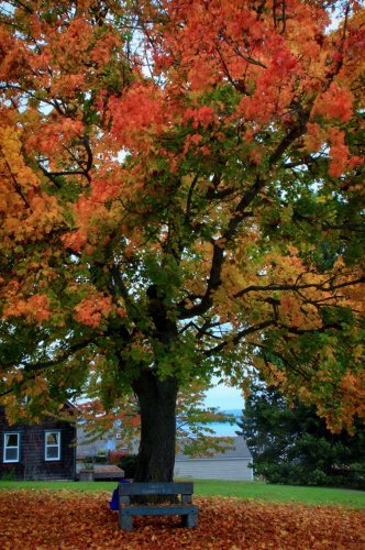 Welton Best 2013 Fall colors_0112 (332x500)
