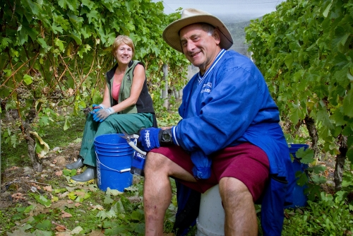 Welton Best 2013 Rocco Gianni making friends in the vineyard (500x334)