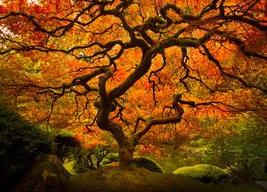 """Fall Splendor"" by Lijah Hanley"