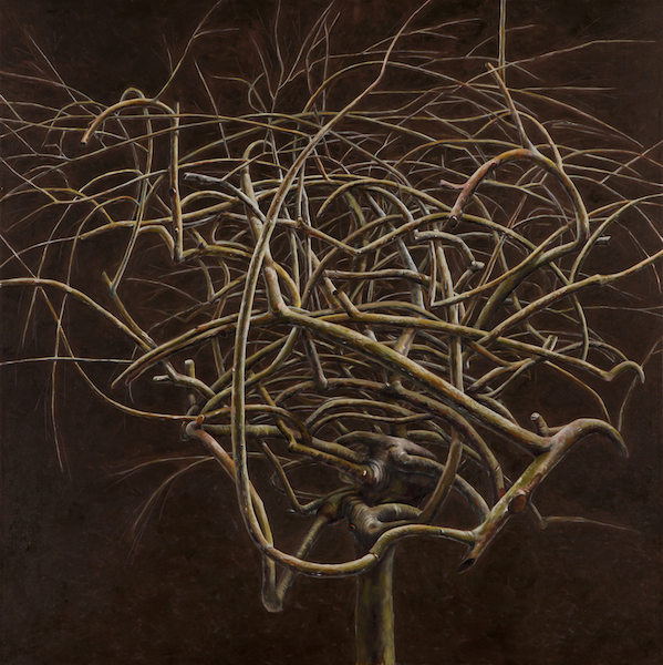 Museo_Woods-tree-12_48x48