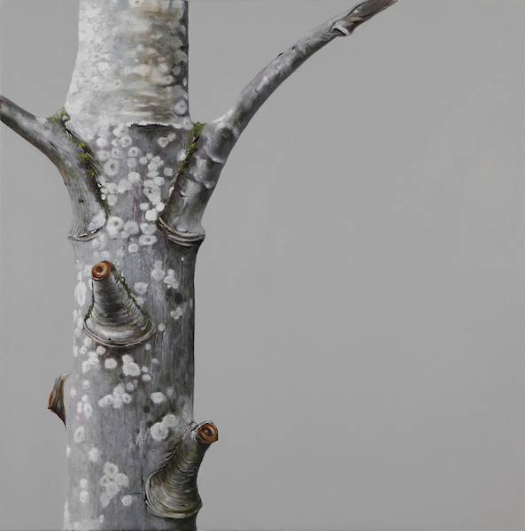 """""""Tree 8"""" by Evelyn Woods (photo credit ??)"""