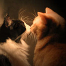 """Photo of Biscuit and Gravy, Byer's """"muses""""    Photo by Sandy Byer"""