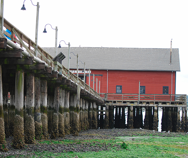 04_MWhidby_Coupeville-Pier-at-Low-Tide