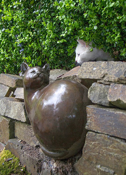 The dry stone wall favored by the cats  (photo by David Welton)