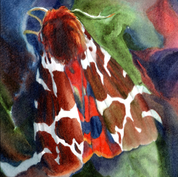 """""""Tiger Moth I"""" by Kay Parsons is one of the watercolors featured in """"Watercolors in the Garden"""" at Rob Schouten Gallery in July. / Photo courtesy of the artist."""