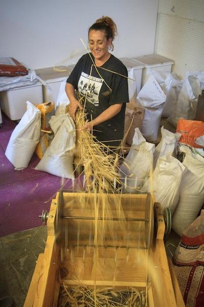 Kelly threshing grain