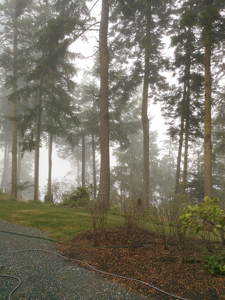 Our fog and trees  (photo by Stephanie Barbé Hammer)