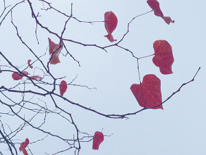 Red hearts hanging  (photo by the author)
