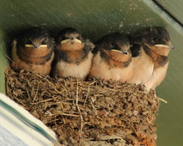 Three - Nest at Bayview Store (640x511)