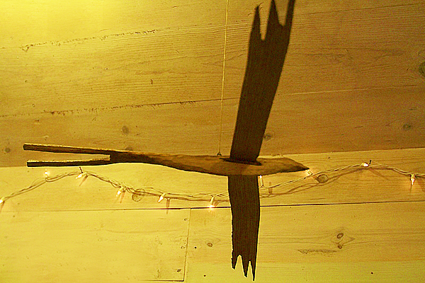 bird with lights