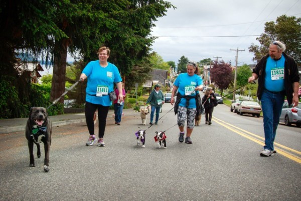 Big dogs and little dogs climb First Street hill-2