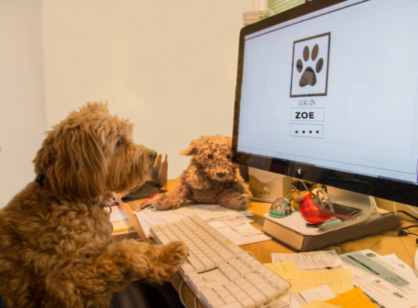 Zoe at desk3 by Marsha Morgan