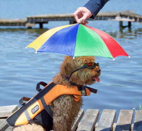 My rainbow umbrella works in winter AND Summer. I protect my baby browns with these wrap-arounds, and swimming's a whole lot safer with my day-glo floaty.