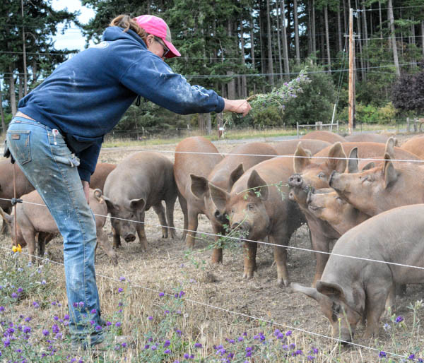Sister Jennifer Jones offers a delicacy to her prized pigs. (photo by Marsha Morgan)