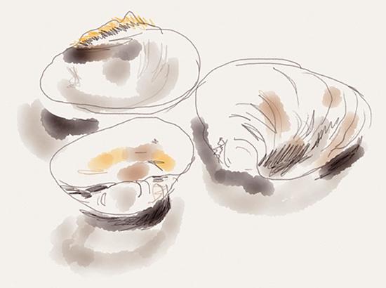 Clamshells     (illustration by Siri Bardarson)