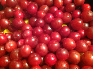 Wild cherry plums like jewels (photo by Judith Walcutt)