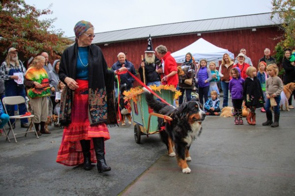 Chloe, the Bernese Mountain dog, showed off her wagon-pulling skills with Linda Sue Schoenharl.