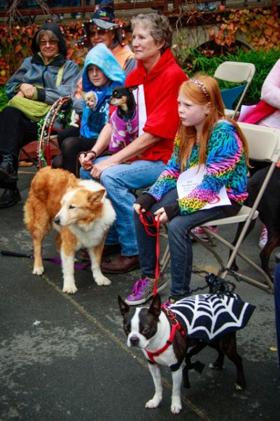 Both canine and human participants looked on in anticipation during the judging ceremony