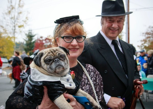 "Buddy, the pug, really ""put on the dog"" in his formalwear, along with his people Gail Liston and Brian Plebanek, and his golden retriever pal Koa (not shown)"
