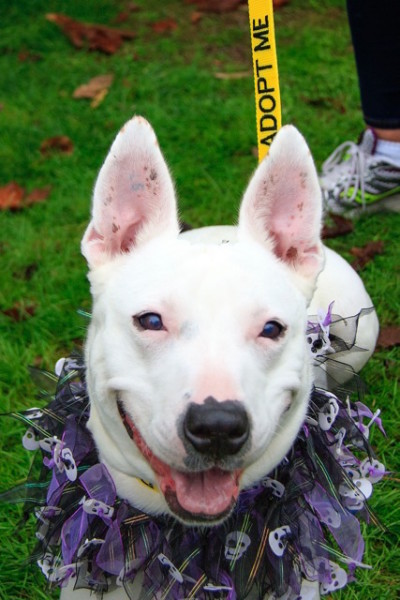 Paige, a friendly, adoptable dog from WAIF, enjoyed her chance to socialize with other pups and people.