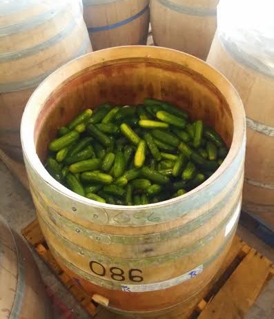 Fresh cucumbers, pre-ferment (photo by Lis David)