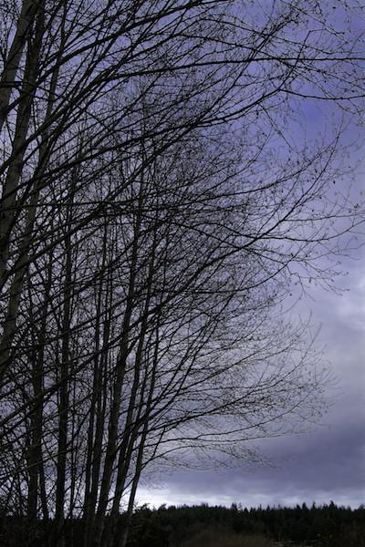 Bare-limbed wintry trees near Greenbank