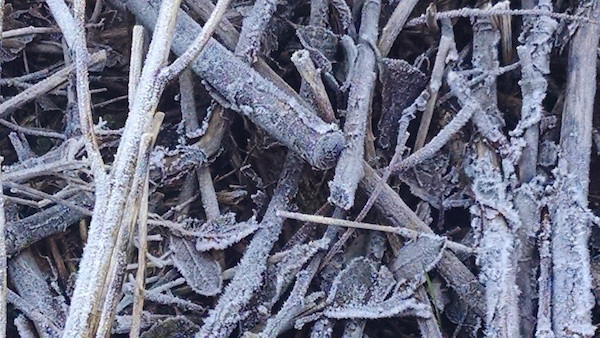Frost photo 1