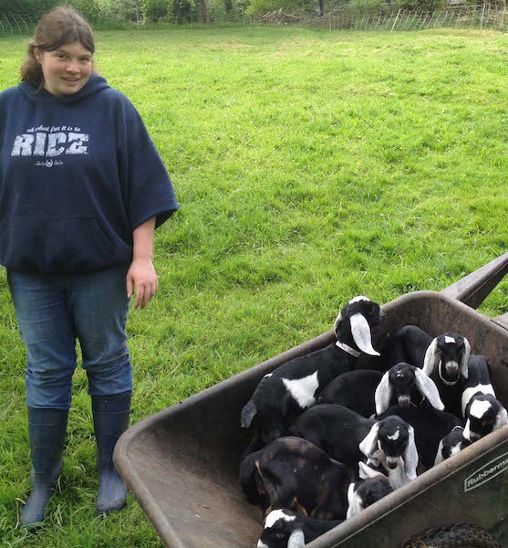 Beth Ryder helping to move growing baby goats from the nursery to the barn years ago when the farm was bustling this time of year. (photo by Vicky Brown)