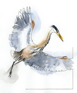 Heron  (image by Frances Wood)