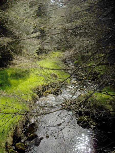 Green Realm, Antrim Glens April 2011 (photo by the author)