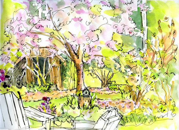 Flowering Cherry Trees   (sketch by Sue Van Etten)