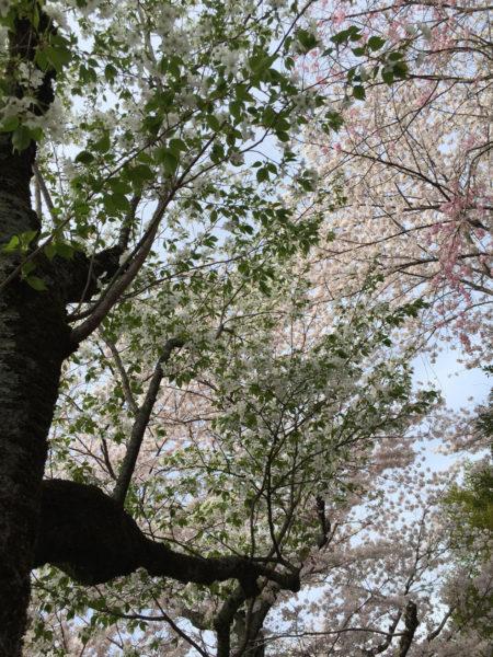 Blog-photo-35