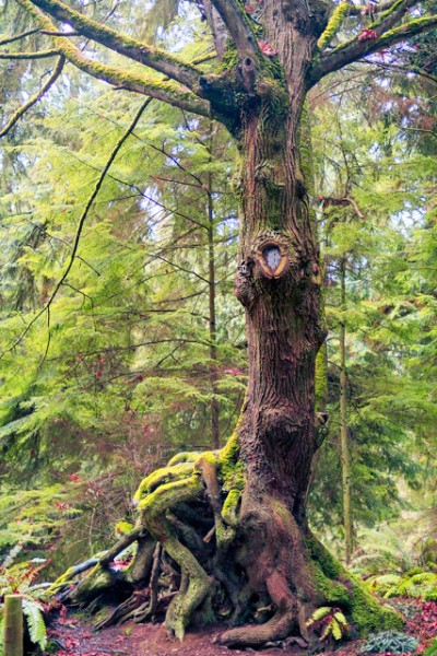 Diversity is the fountain of youth for the Pacific Northwest old growth forest, sustaining more life than any other forest in the world.