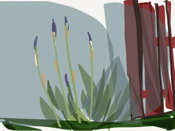 New iris (image by Siri Bardarsan)